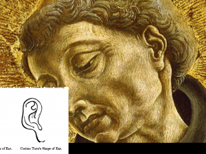 Figure 4: The Ear as Painted by Cosmè Tura and Drawn By Morelli